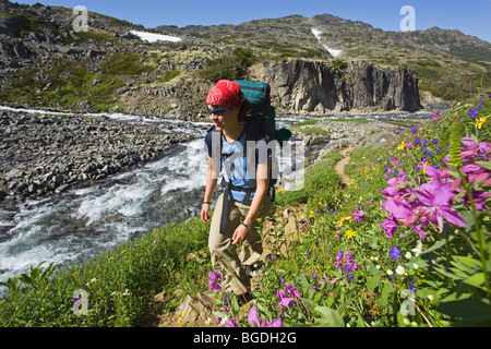 Young woman hiking, backpacking, hiker with backpack, blooming alpine flowers, historic Chilkoot Pass, Chilkoot - Stock Photo