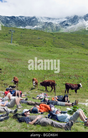 hikers relaxing in a field of cows, Chamonix Valley, Rhone Alps, France - Stock Photo