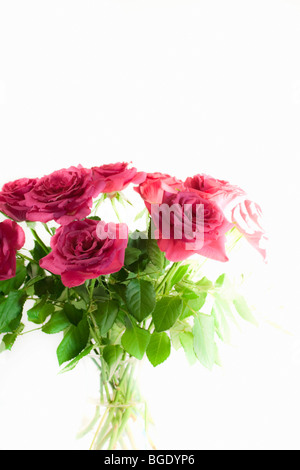 Bouquet of pink roses in vase against backlit white background. Isolated. Copy space. Soft focus. Color. - Stock Photo