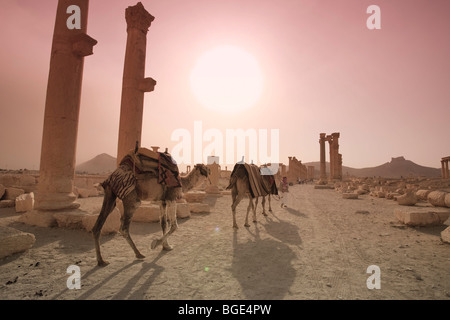 Syria, Palmyra ruins (UNESCO Site), Great Colonnade - Stock Photo