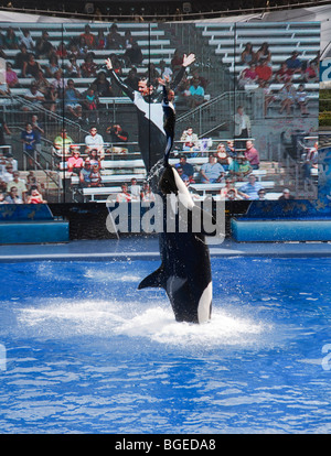 Shamu the killer whale performs in the Believe show at Seaworld, Orlando, Florida - Stock Photo