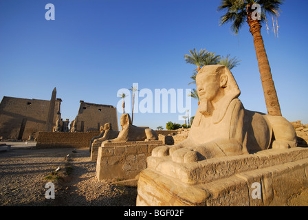 LUXOR, EGYPT. A dawn view of the Avenue of Sphinxes at Luxor Temple. 2009. - Stock Photo