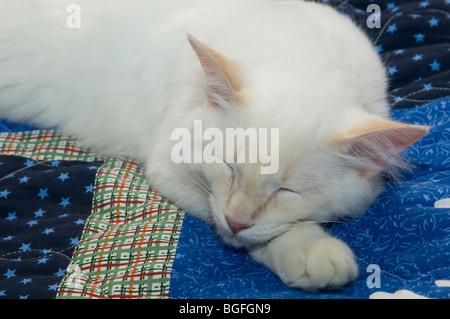 White cat sleeping on blue quilt - Stock Photo