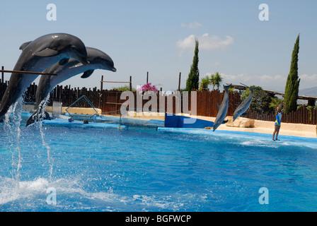 dolphins jumping, Dolphin Show, Mundomar, Benidorm, Alicante Province, Comunidad Valenciana, Spain - Stock Photo