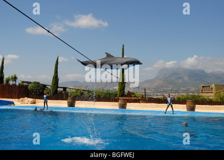 performing dolphin jumping over  rope, Dolphin Show, Mundomar, Benidorm, Alicante Province, Comunidad Valenciana, - Stock Photo
