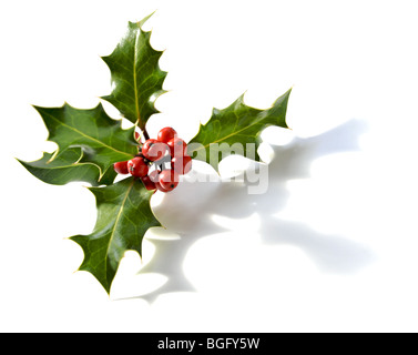 Holly sprig with red berries on white - Stock Photo