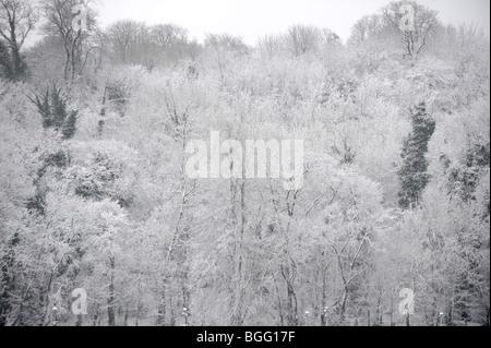 Withdean Stadium blend in with snow laden trees in Brighton Sussex UK winter - Stock Photo