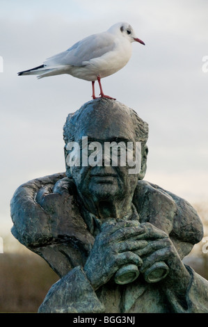 A black headed gull in winter plumage, perching on the sculpture of Sir Peter Scott at the Slimbridge Wildfowl Trust - Stock Photo
