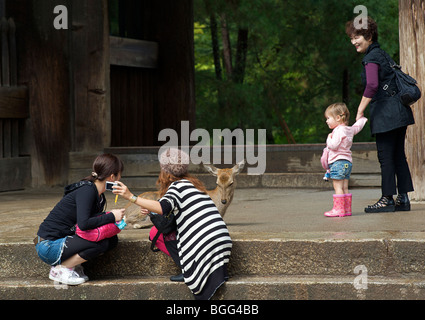 Deer roam free in Central Nara. The grounds of Todaiji Temple Nara prefecture Japan - Stock Photo
