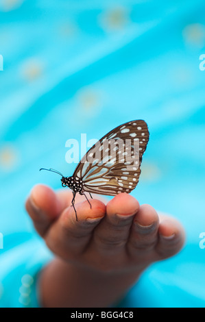 Tirumala limniace. Blue Tiger butterfly on the hands of an Indian girl. India - Stock Photo
