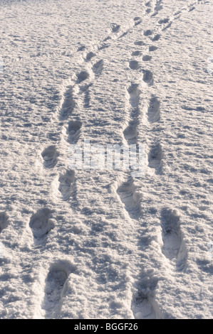 Footprints in the snow - Stock Photo