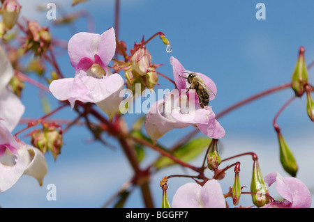 Bee sitting on a flower, close-up - Stock Photo