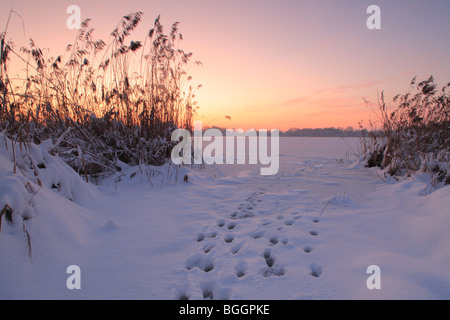 animal tracks in snow on frozen Posthorn lake (Posthornsee) in Halle (Germany) at dusk, Posthornsee in Halle (Saale) - Stock Photo