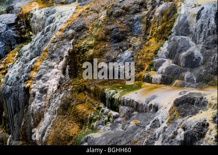 Whakarewarewa Thermal Reserve, North Island, New Zealand - Stock Photo
