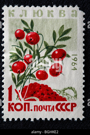 Cranberry, postage stamp, USSR, 1964 - Stock Photo