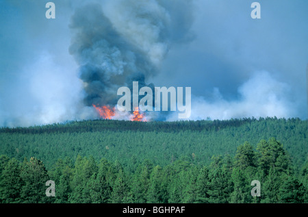Forest fire burns through forest of ponderosa pine and mixed conifers in Coconino National Forest, near Flagstaff, - Stock Photo