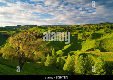 Farmland near Taihape, North Island, New Zealand - Stock Photo