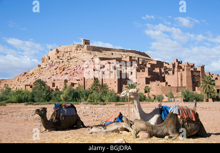 Camels in the foreground by Ait Ben Haddou Ksar with Wadi Mellah dried river bed in Morocco. - Stock Photo