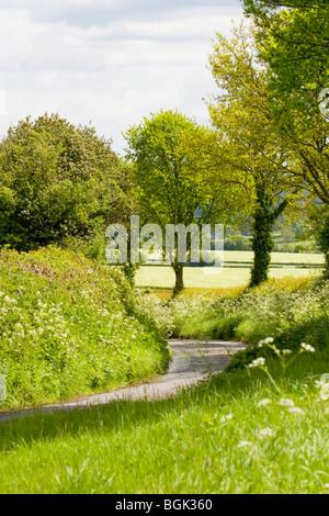 Shropshire country lane in springtime, Shropshire, England, UK - Stock Photo