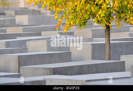 Tree with autumn foliage in the memorial to the murdered jews of Europe, Holocaust memorial, Berlin, Germany - Stock Photo
