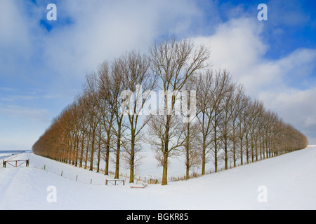 Composition with trees in the Johannes Kerkhovenpolder near Woldendorp, province Groningen, Netherlands