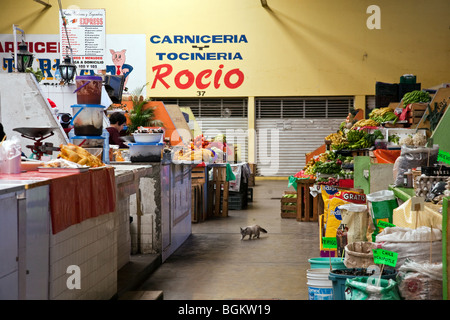 spotless aisle in small indoor public market with piled chicken fruit vegetables & spices & a pet cat in Oaxaca - Stock Photo