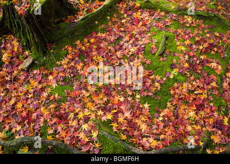 Fallen leaves on ground next to tree trunk Yamashina-ku Kyoto Japan - Stock Photo