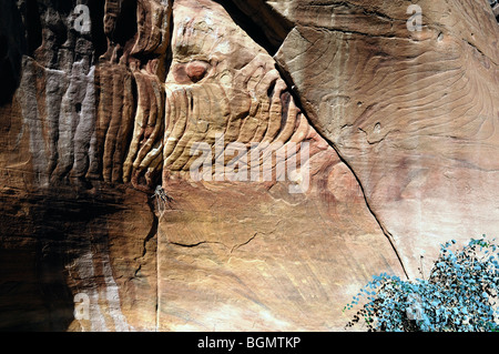 Colorful rock face and small green plant - Stock Photo