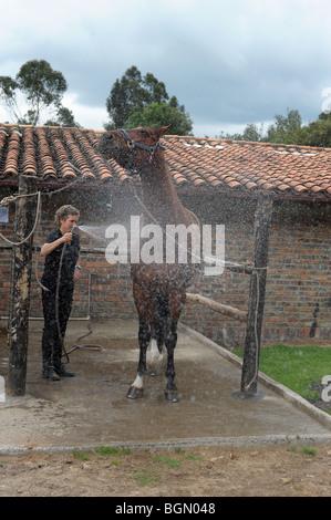 Hosing big bay horse  Bogota, Colombia, South America - Stock Photo
