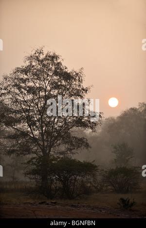 Jungles of Ranthambhore national park at sunrise - Stock Photo