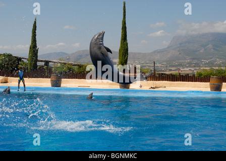 dolphin jumping at Dolphin Show, Mundomar, Benidorm, Alicante Province, Comunidad Valenciana, Spain - Stock Photo