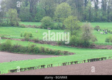 Bocage landscape with hedges and trees, Voeren, Belgium - Stock Photo