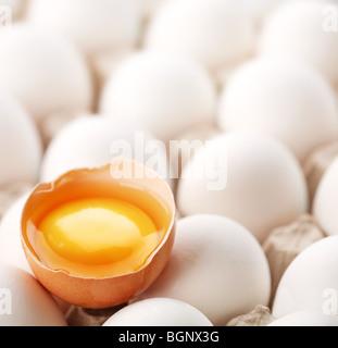 broken brown egg is among the whites of eggs. - Stock Photo