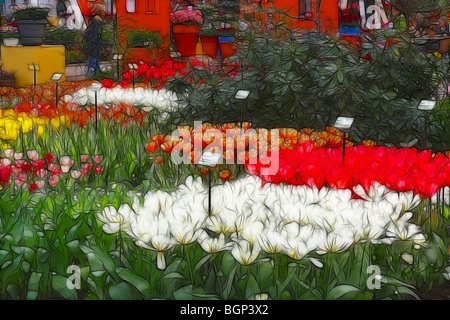 Photo illustration:  Displays of tulips for sale at a garden centre in Spring - Stock Photo