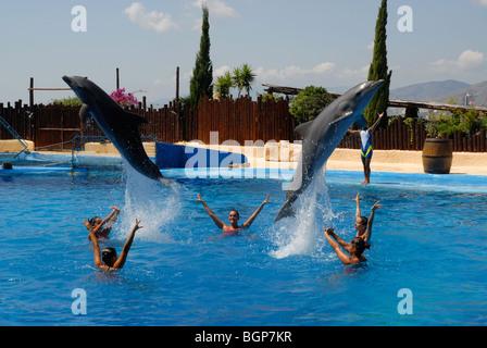 dolphins jumping Dolphin Show, Mundomar, Benidorm, Alicante Province, Comunidad Valenciana, Spain - Stock Photo