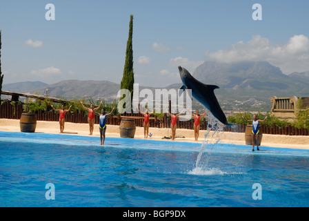 Dolphin jumping during show, Mundomar, Benidorm, Alicante Province, Comunidad Valenciana, Spain - Stock Photo