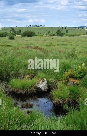 Pond / palsa on the moors of the nature reserve High Fens / Hautes Fagnes, Belgian Ardennes, Belgium - Stock Photo