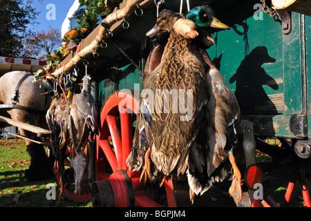 Cart with hunting game - mallard, wood pigeon, pheasant, hare - during commemoration of Saint Hubert / Saint Hubertus, - Stock Photo