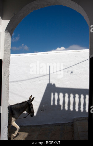 Tourist rides up the hill on a donkey at Lindos Village - Stock Photo