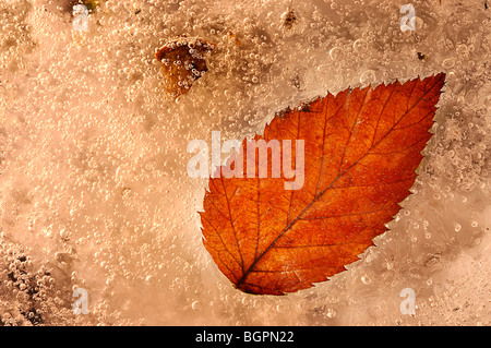 Frozen pond with a autumn  colored leaf  that has been frozen in time showing the veins and the ice crystals - Stock Photo