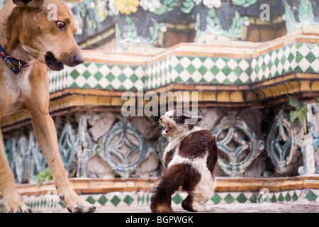 Cat and dog fight - Stock Photo