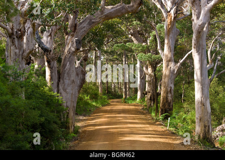 Avenue of trees, West Cape Howe NP. Albany, Western Australia. - Stock Photo