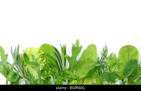 herbs for seasoning on the edge of the image on a white background - Stock Photo