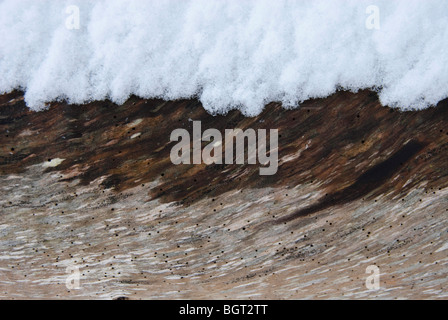 Snowfall on a fallen tree trunk with woodworm - Stock Photo
