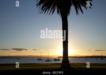Palm Tree and Yachts at Sunset, Tauranga Harbour, Mount Maunganui, Bay of Plenty, North Island, New Zealand - Stock Photo