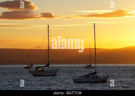 Yachts at Sunset, Tauranga Harbour, Mount Maunganui, Bay of Plenty, North Island, New Zealand - Stock Photo