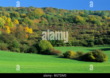 Hedge Landscape in Autumn colour, Germany - Stock Photo