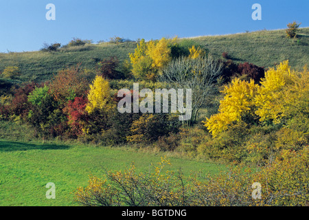 Extensive Hedge in Autumn Colour - Stock Photo