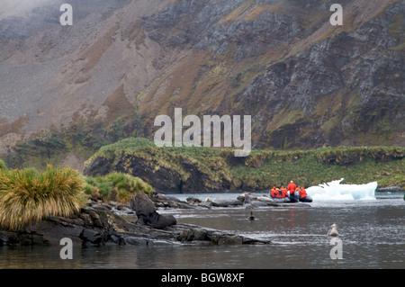Tourists exploring South Georgia Island by zodiac - Stock Photo