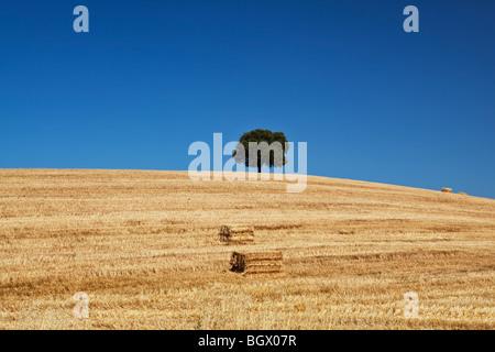 Lonely cork tree on hill Alentejo region Portugal - Stock Photo